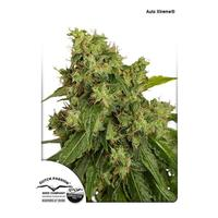 Dutch Passion Auto Xtreme x3