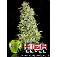 Eva Seeds High Level x3